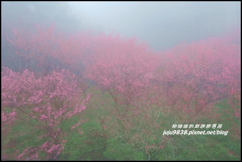 協雲宮29.JPG