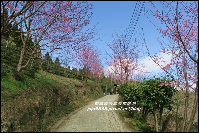 山上人家29.JPG