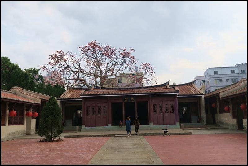 百年木棉7.JPG