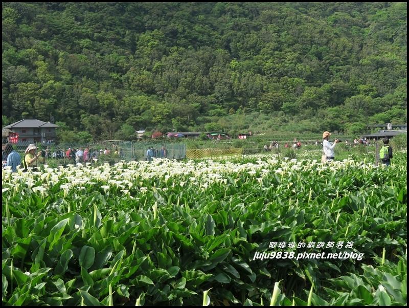 竹子湖8.JPG