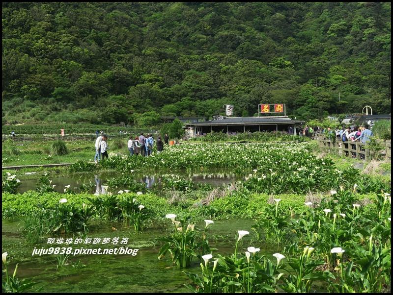 竹子湖10.JPG