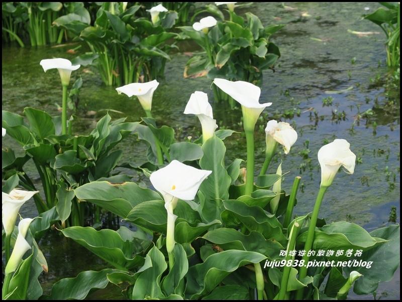 竹子湖12.JPG