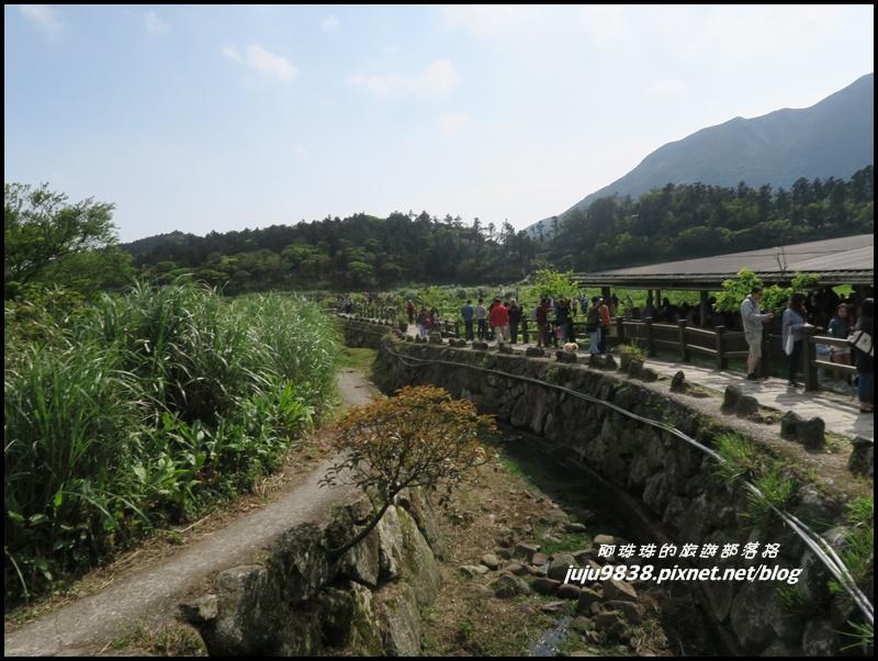 竹子湖14.JPG