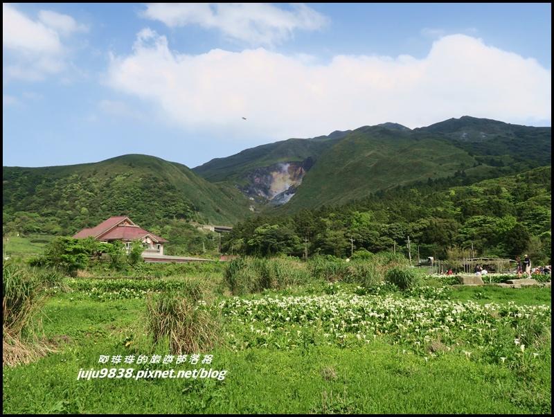 竹子湖25