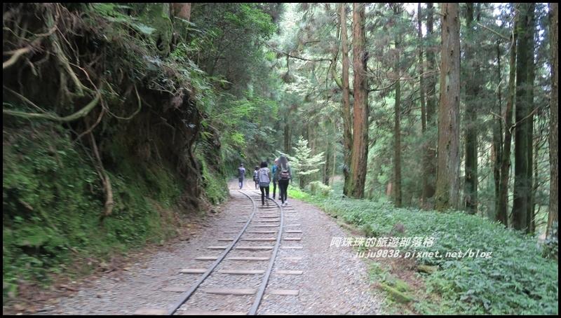 特富野古道4.JPG