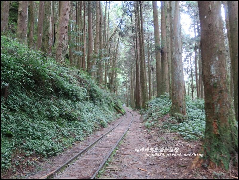 特富野古道13.JPG