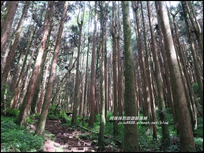 特富野古道29.JPG