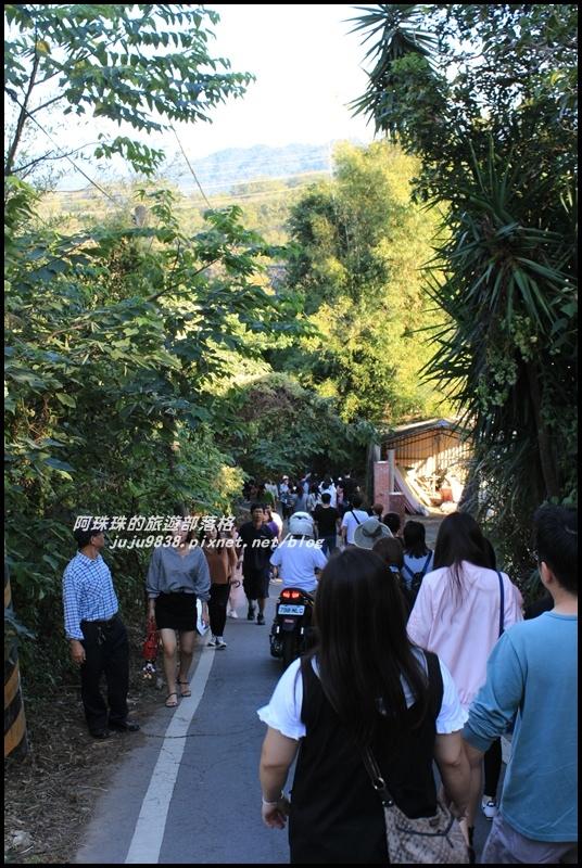 三灣落羽松1.JPG