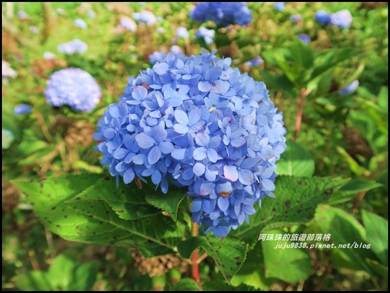 沐心泉55.JPG