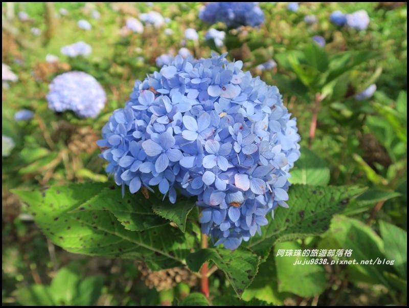 沐心泉60.JPG
