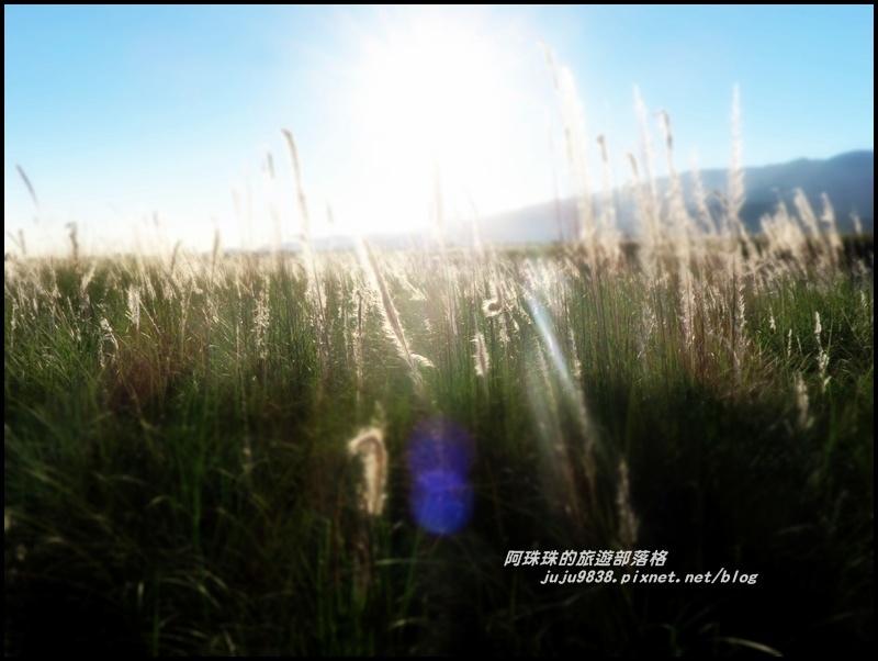蘭陽溪甜根子草5.JPG