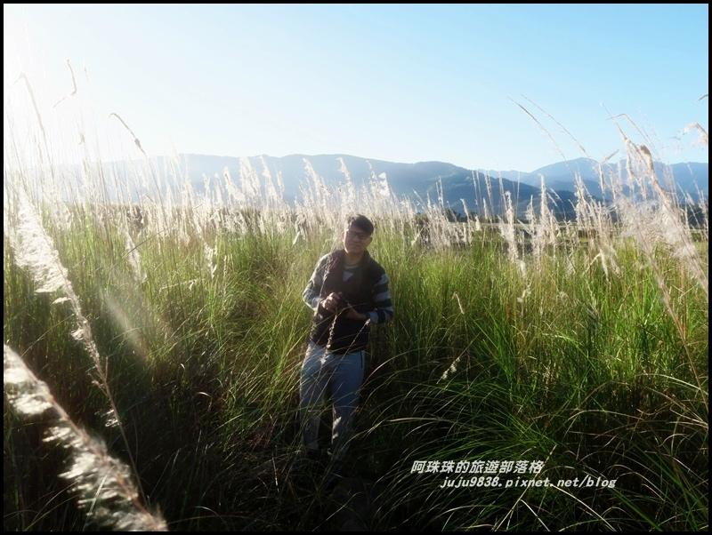 蘭陽溪甜根子草7.JPG