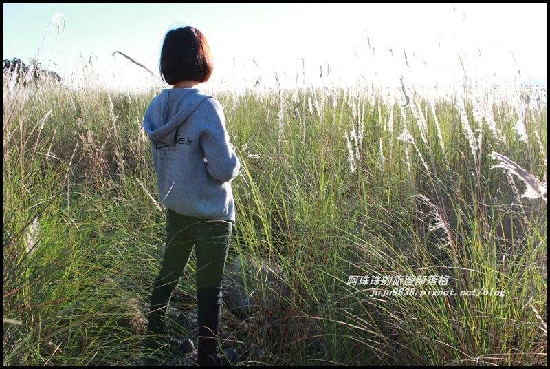 蘭陽溪甜根子草17.JPG