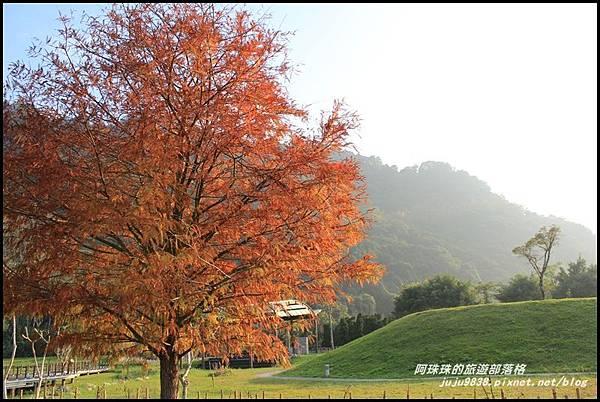 石門水庫楓紅20.JPG