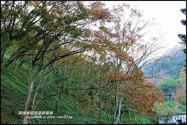 石門水庫楓紅24.JPG