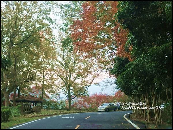石門水庫楓紅62.JPG