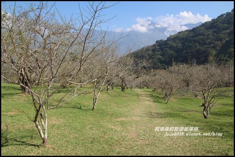 信義柳家梅園2.JPG