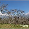 信義柳家梅園4.JPG