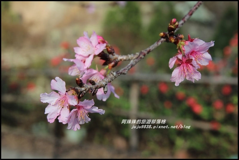 信義柳家梅園10.JPG