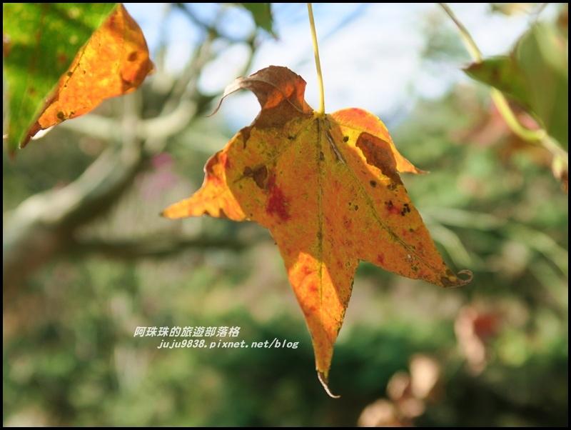 信義柳家梅園18.JPG