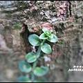 小粗坑石門山38.JPG