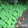 龜山島48.JPG
