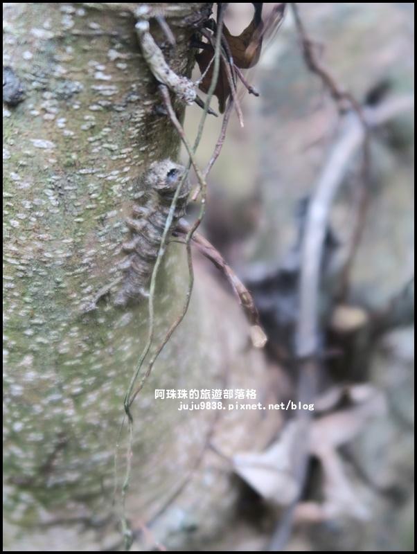 獅潭生態旅遊110.JPG