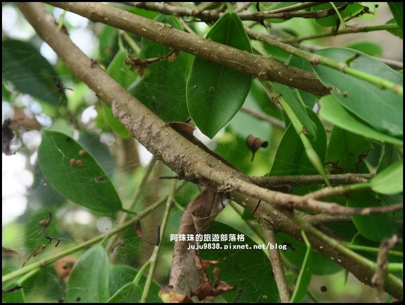 獅潭生態旅遊108.JPG