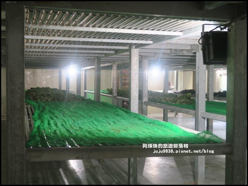 獅潭生態旅遊115.JPG