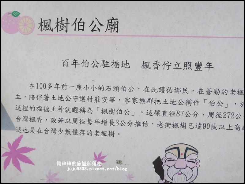 獅潭生態旅遊152.JPG