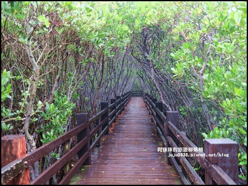 新豐紅樹林9.JPG