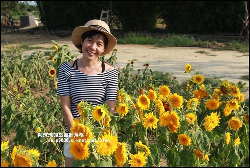 向陽農場8.JPG