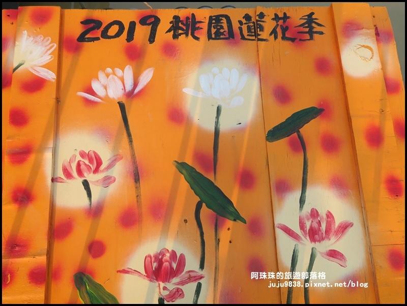 桃園蓮花季21.JPG