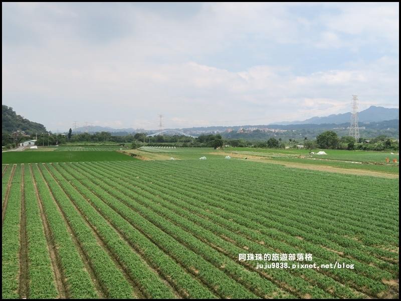 大溪韭菜花季17.JPG