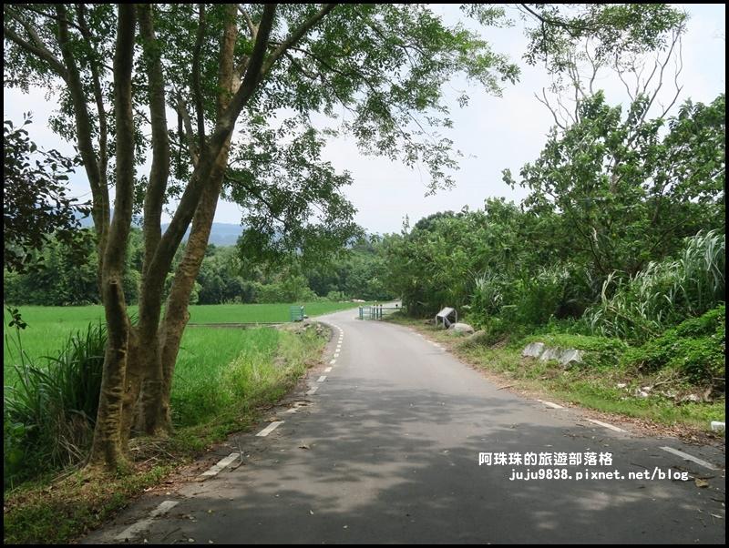 大溪韭菜花季15.JPG