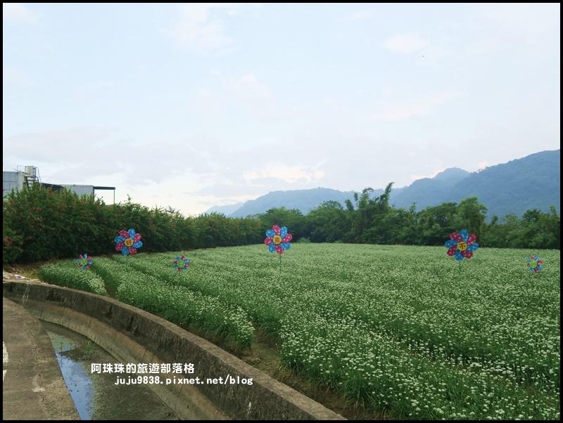 大溪韭菜花季23.JPG