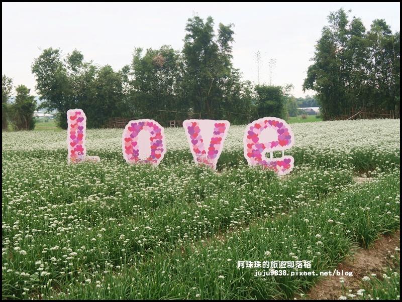 大溪韭菜花季25.JPG