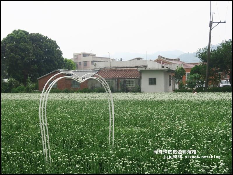 大溪韭菜花季32.JPG
