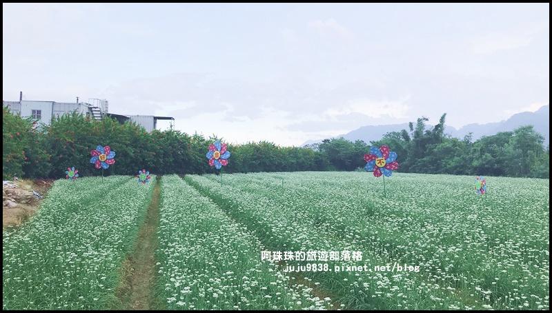 大溪韭菜花季41.JPG