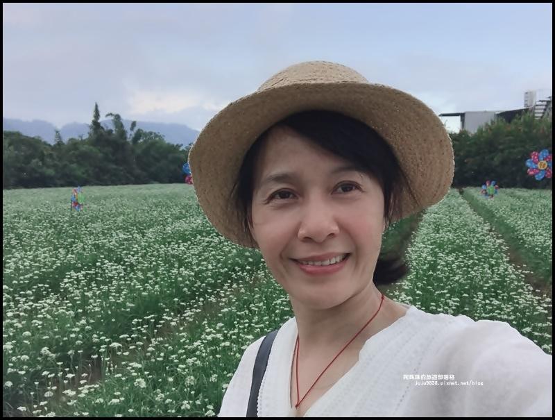 大溪韭菜花季42.JPG