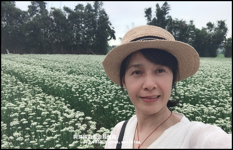 大溪韭菜花季45.JPG