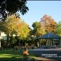 洛克馬公園落羽松1.jpg