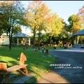 洛克馬公園落羽松2.jpg