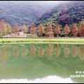 福園落羽松1.jpg