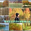 精選全台落羽松景點1