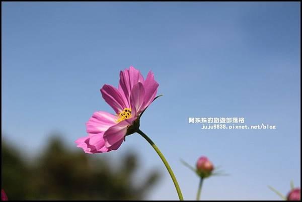 大溪花海5.JPG