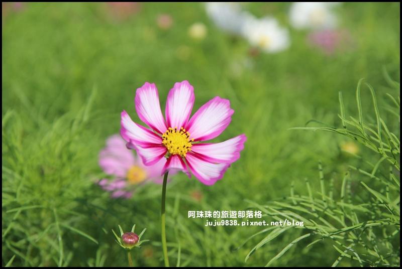 大溪花海2.JPG