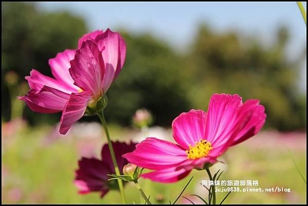 大溪花海3.JPG