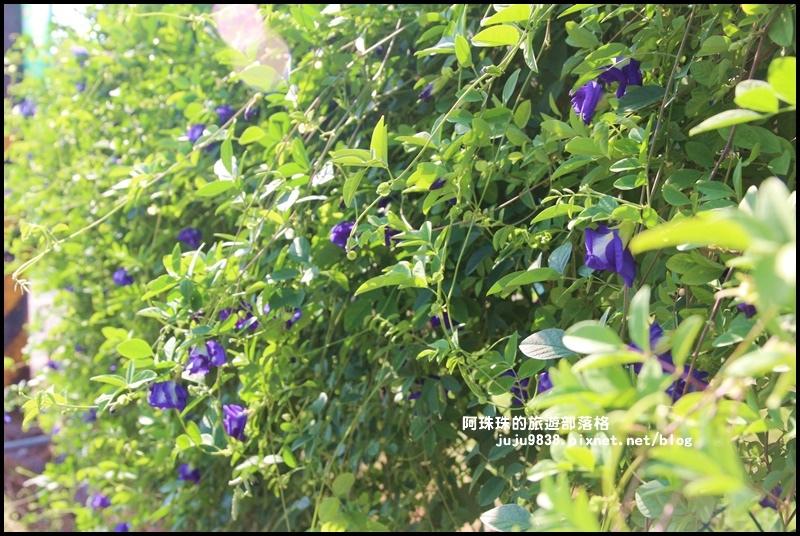 大溪花海11.JPG