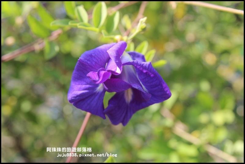 大溪花海12.JPG